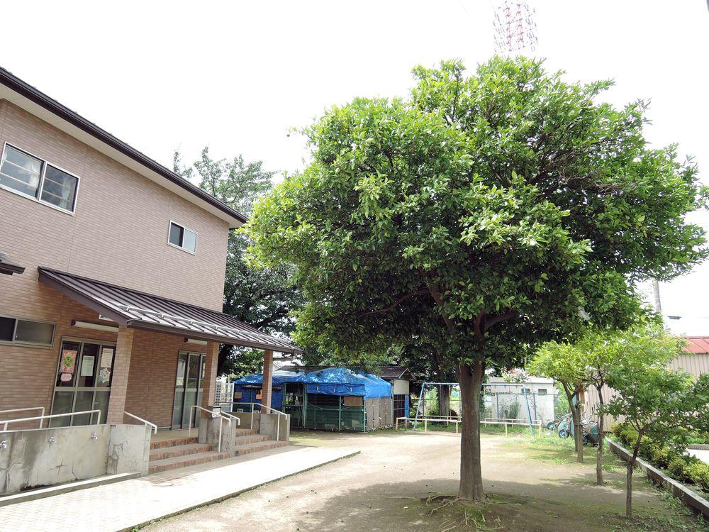栴檀|宮本小学校の校庭