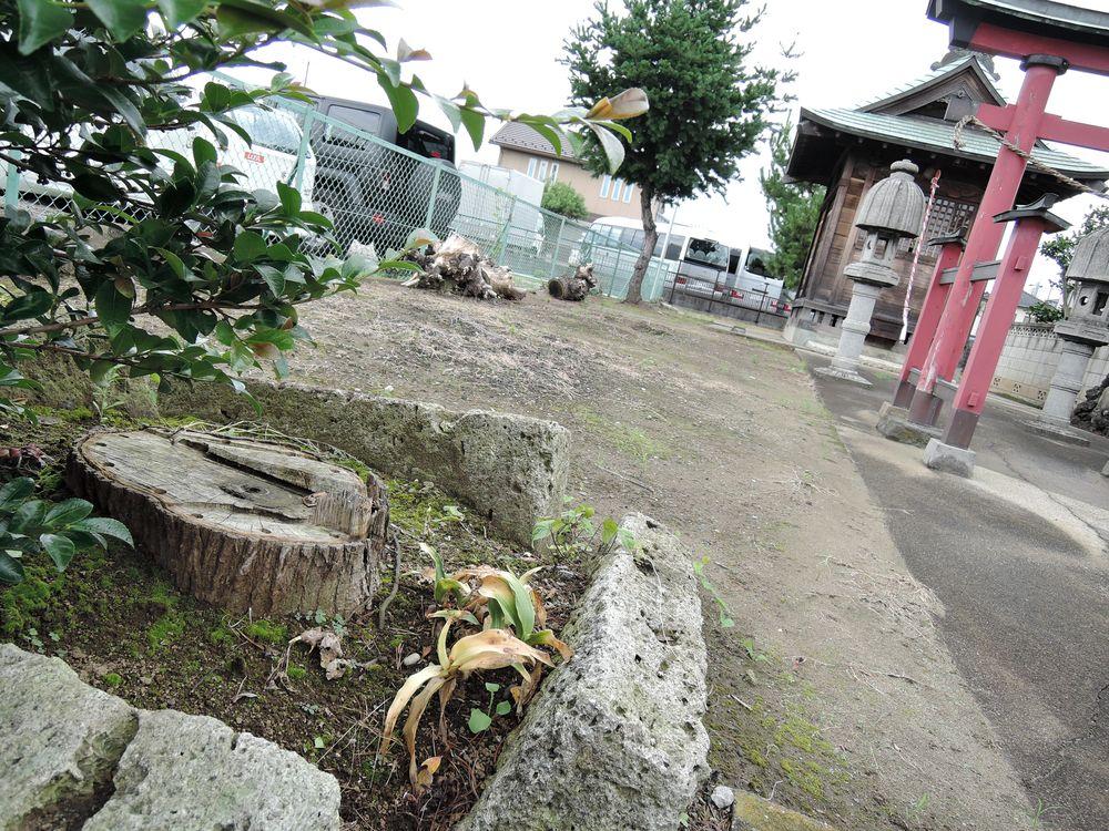 神木の切り株|参道左